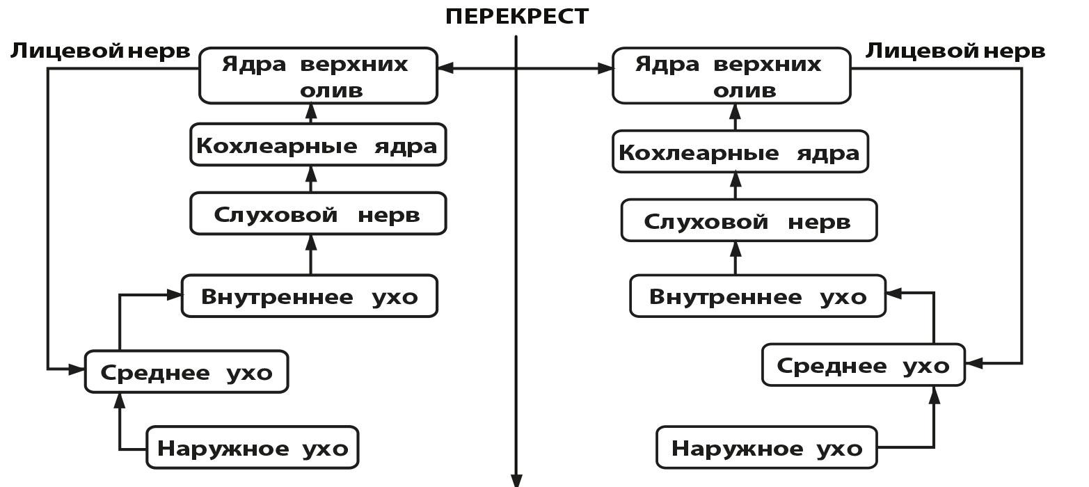 Акустическая рефлексометрия